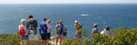 Toni Cook Adventures Guided Hikes