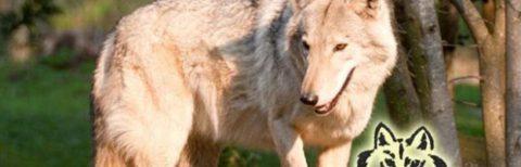 wolf sanctury